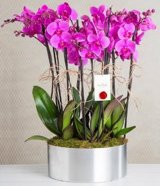 11 dallı mor orkide metal vazoda  Türkiye kaliteli taze ve ucuz çiçekler