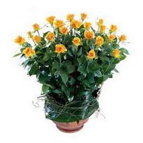 Türkiye internetten çiçek satışı  10 adet sari gül tanzim cam yada mika vazoda çiçek