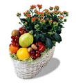 Türkiye çiçek mağazası , çiçekçi adresleri  meyva sepeti ve kalanche