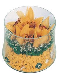 Türkiye çiçek , çiçekçi , çiçekçilik  cam fanus içerisinde 3 adet kandil orkide
