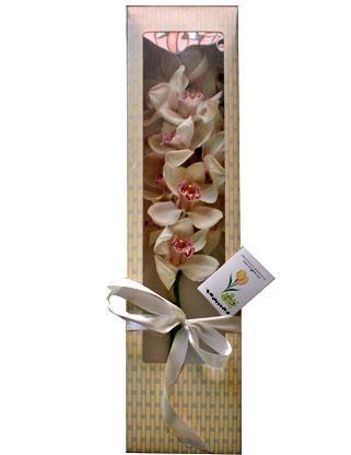 Türkiye çiçek siparişi vermek  ÖZEL SEVENLERE 1 DAL ORKIDE
