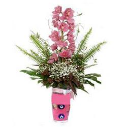 Türkiye çiçek yolla  cam yada mika vazo içerisinde tek dal orkide çiçegi