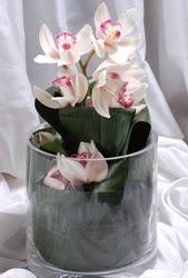Türkiye ucuz çiçek gönder  Cam yada mika vazo içerisinde tek dal orkide