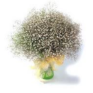 Türkiye uluslararası çiçek gönderme  cam yada mika vazo içerisinde cipsofilya demeti