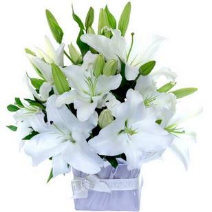 Türkiye güvenli kaliteli hızlı çiçek  2 dal cazablanca vazo çiçeği