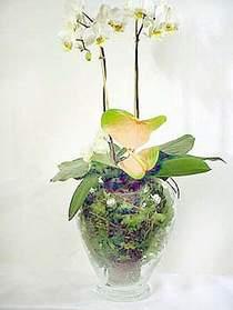 Türkiye çiçek yolla , çiçek gönder , çiçekçi   Cam yada mika vazoda özel orkideler