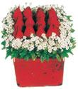 Türkiye yurtiçi ve yurtdışı çiçek siparişi  Kare cam yada mika içinde kirmizi güller - anneler günü seçimi özel çiçek