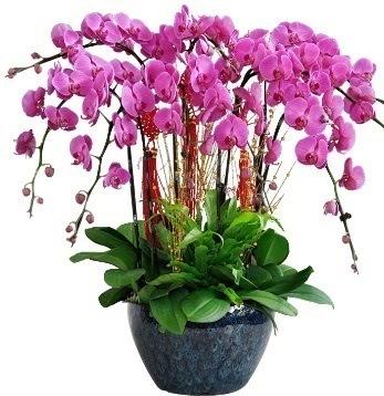 9 dallı mor orkide  Türkiye internetten çiçek siparişi