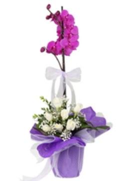 1 dal mor orkide ve 11 adet beyaz gül  Türkiye internetten çiçek siparişi