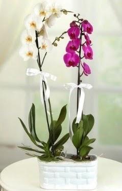 1 mor 1 dal beyaz İthal orkide sepet içerisinde  Türkiye uluslararası çiçek gönderme