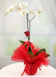 Tek dal beyaz orkide tek dal kırmızı gül  Türkiye çiçek satışı