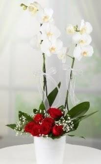 2 dallı beyaz orkide 7 adet kırmızı gül  Türkiye internetten çiçek siparişi