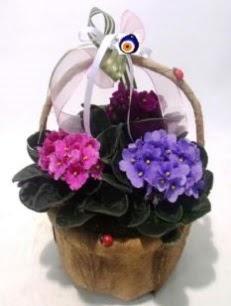 Sepet içerisinde 3 adet menekşe  Türkiye çiçek siparişi vermek
