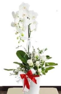 Tek dallı beyaz orkide 5 beyaz gül  Türkiye çiçekçi telefonları