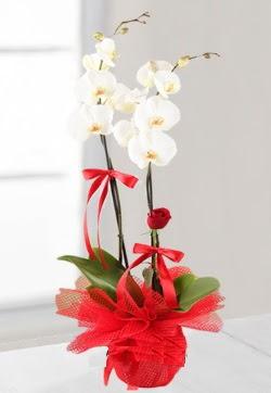 2 dallı beyaz orkide ve 1 adet kırmızı gül  Türkiye çiçek siparişi vermek
