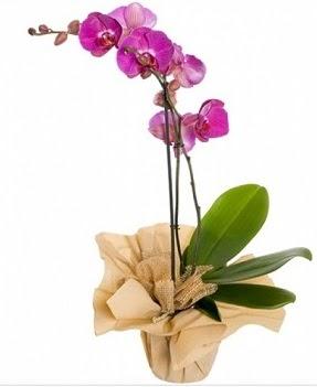 Tek dal mor orkide  Türkiye kaliteli taze ve ucuz çiçekler