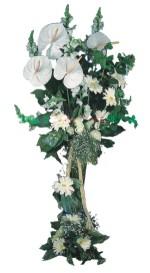 Türkiye uluslararası çiçek gönderme  antoryumlarin büyüsü özel