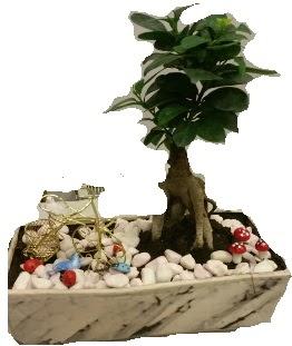 Japon ağacı bonsai satışı  Türkiye çiçek siparişi vermek