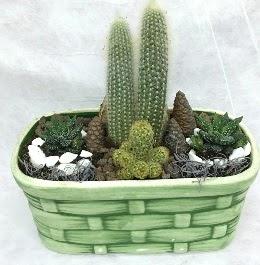 Seramik içerisinde 5 kaktüslü terrarium  Türkiye kaliteli taze ve ucuz çiçekler