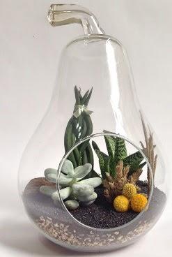 Orta boy armut 5 kaktüs terrarium  Türkiye çiçek gönderme sitemiz güvenlidir