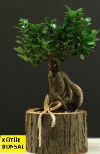 Kütük içerisinde Bonsai japon ağacı  Türkiye ucuz çiçek gönder