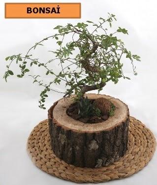Doğal ağaç kütük içerisinde bonsai bitkisi  Türkiye kaliteli taze ve ucuz çiçekler