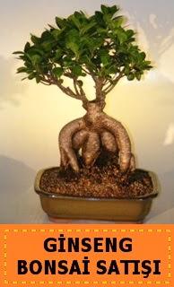 Ginseng bonsai satışı japon ağacı  Türkiye çiçek siparişi sitesi