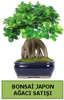 Bonsai japon ağacı satışı  Türkiye çiçek yolla , çiçek gönder , çiçekçi