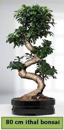 80 cm özel saksıda bonsai bitkisi  Türkiye online çiçekçi , çiçek siparişi