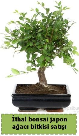 İthal bonsai saksı çiçeği Japon ağacı satışı  Türkiye çiçek mağazası , çiçekçi adresleri