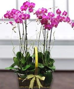 7 dallı mor lila orkide  Türkiye kaliteli taze ve ucuz çiçekler