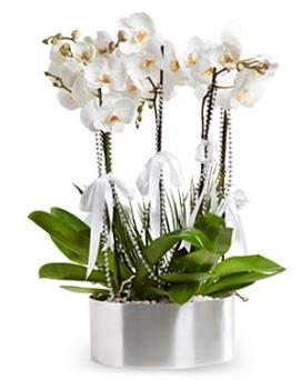 Beş dallı metal saksıda beyaz orkide  Türkiye güvenli kaliteli hızlı çiçek