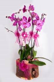 4 dallı kütük içerisibde mor orkide  Türkiye çiçek yolla , çiçek gönder , çiçekçi