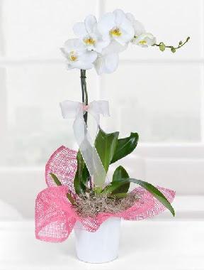 Tek dallı beyaz orkide seramik saksıda  Türkiye yurtiçi ve yurtdışı çiçek siparişi