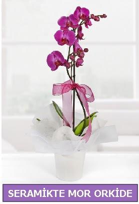 Seramik içerisinde birinci kalite tek dallı mor orkide  Türkiye çiçek mağazası , çiçekçi adresleri