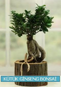 Kütük ağaç içerisinde ginseng bonsai  Türkiye kaliteli taze ve ucuz çiçekler