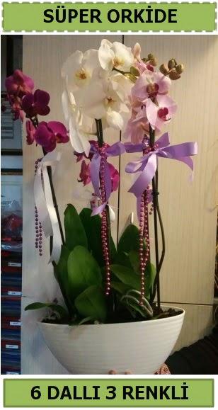 6 dallı 3 renk özel vazoda orkide çiçeği  Türkiye çiçek yolla , çiçek gönder , çiçekçi