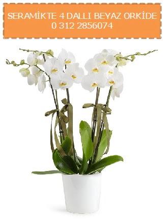 Seramikte 4 dallı beyaz orkide  Türkiye çiçek , çiçekçi , çiçekçilik