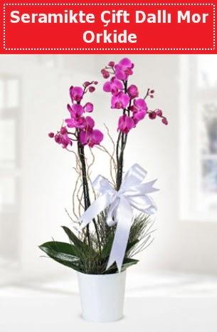 Seramikte Çift Dallı Mor Orkide  Türkiye çiçek siparişi vermek